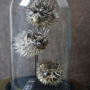 taxidermy-porcupine-vissen-stolp