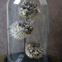 Opgezette Porcupine Vissen in Stolp